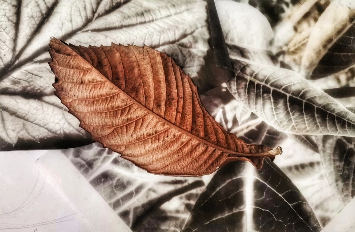 Leaves and Nature